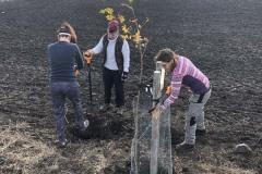 MY-TREES-DONATE-volunteering-sazeni-00007