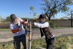 MY-TREES-DONATE-volunteering-sazeni-00025
